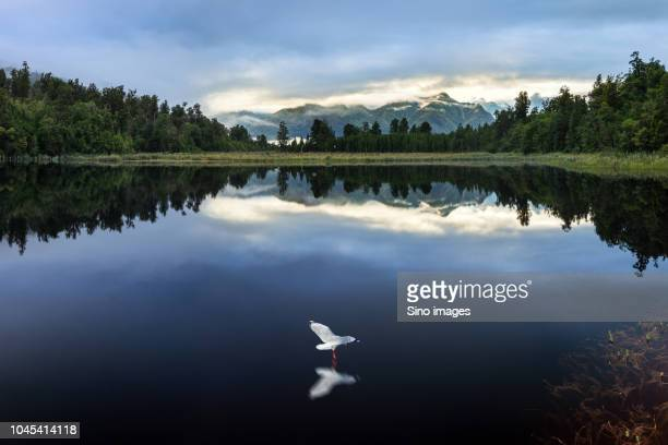 forest reflecting in lake, new zealand - image stock pictures, royalty-free photos & images