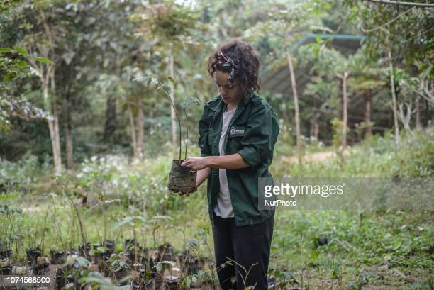 Forest restoration project in the Elephant Conservation Center Sayaboury Laos in December 2018 Laos was known as The land of a million elephants in...