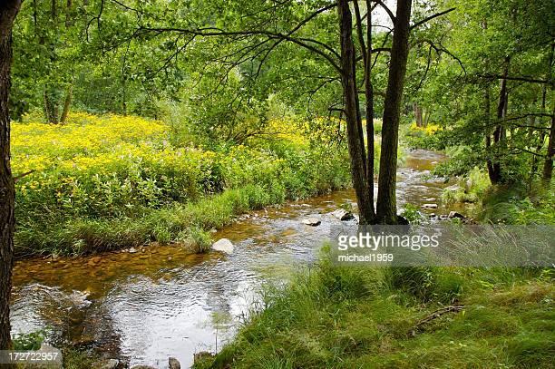 Wald-Fluss Ilz