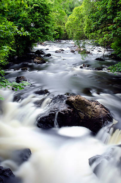 Forest river in long exposure