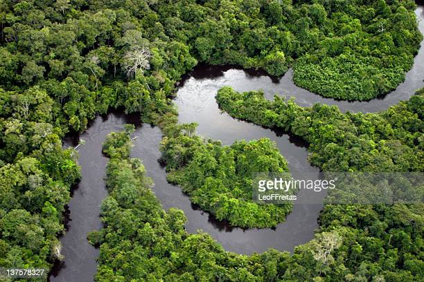 forest river - brasilien stock-fotos und bilder