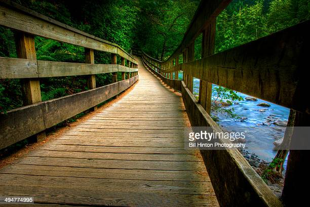 forest river walk. - bill hinton stock pictures, royalty-free photos & images