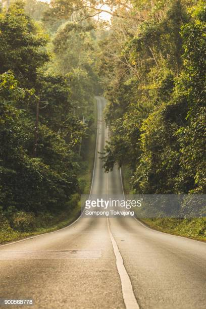 forest road at khaoyai national park - hill stock pictures, royalty-free photos & images