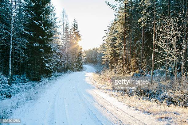 Forest road at winter
