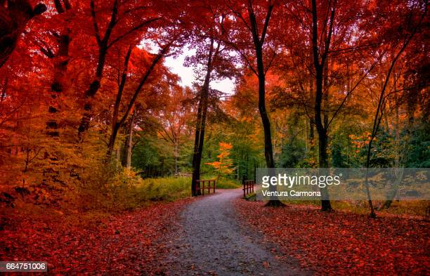 forest road in autumn - beschaulichkeit stock pictures, royalty-free photos & images