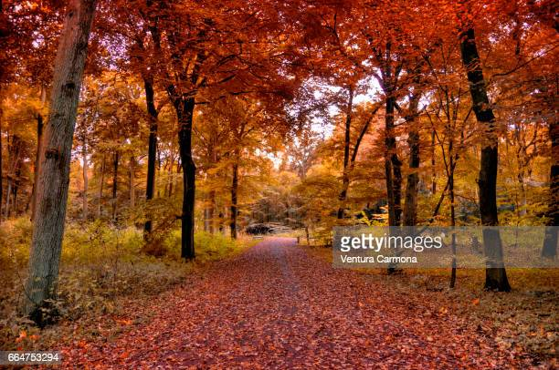 forest road in autumn - ruhige szene stock pictures, royalty-free photos & images