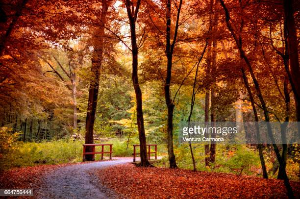 forest road in autumn - sinnlichkeit stock pictures, royalty-free photos & images