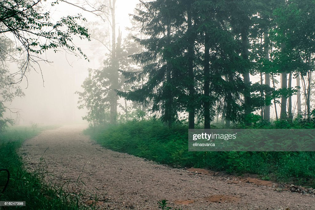 Forest road in fog : Stock Photo