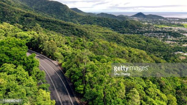 forest road in the kuranda rainforest - cairns stock pictures, royalty-free photos & images