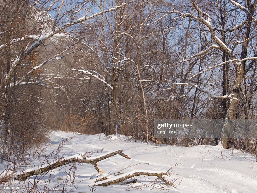 Forest road in the winter afternoon : Stock Photo