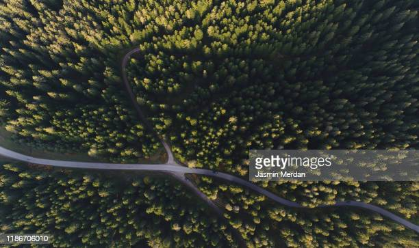 forest road intersection - nature alphabet letters stock pictures, royalty-free photos & images