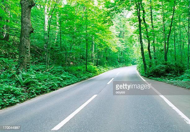林 Road