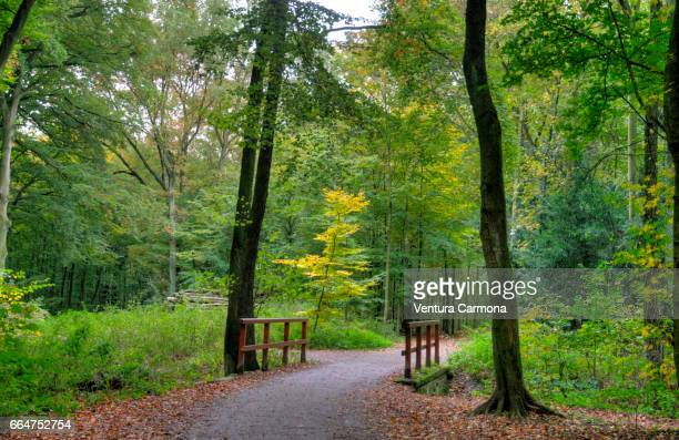 forest road - beschaulichkeit stock pictures, royalty-free photos & images