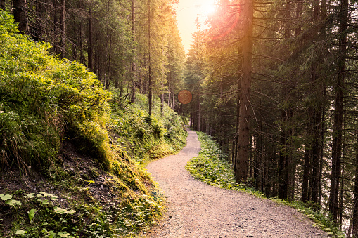 Forest Road Under Sunset Sunbeams. 611620630