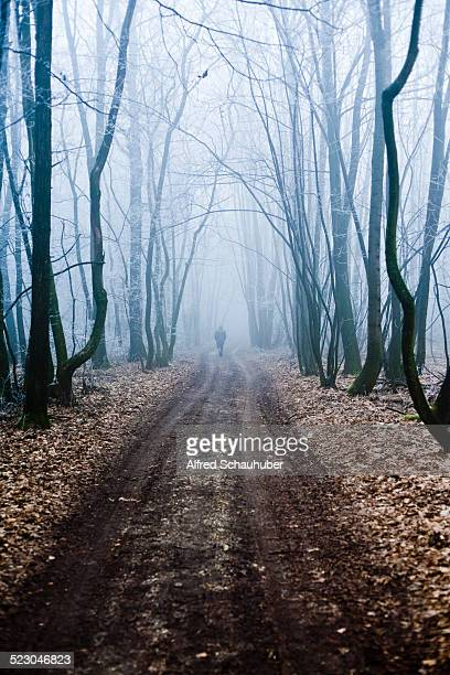 Forest road, Weinviertel district, Lower Austria, Austria, Europe
