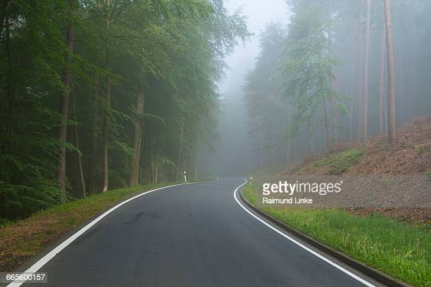 Forest road with morning mist