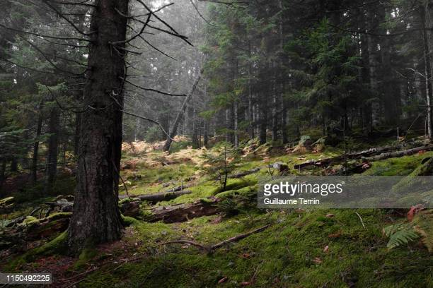 forest sanctuary - auvergne rhône alpes stock pictures, royalty-free photos & images