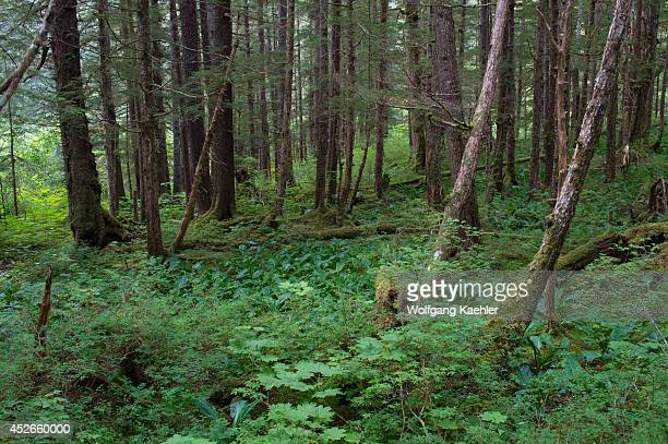 Forest scene at Idaho Inlet on Chichagof Island Tongass National Forest Alaska USA