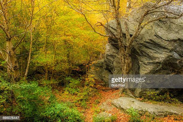 forest scene in smugglers notch state park, vt - state park stock pictures, royalty-free photos & images