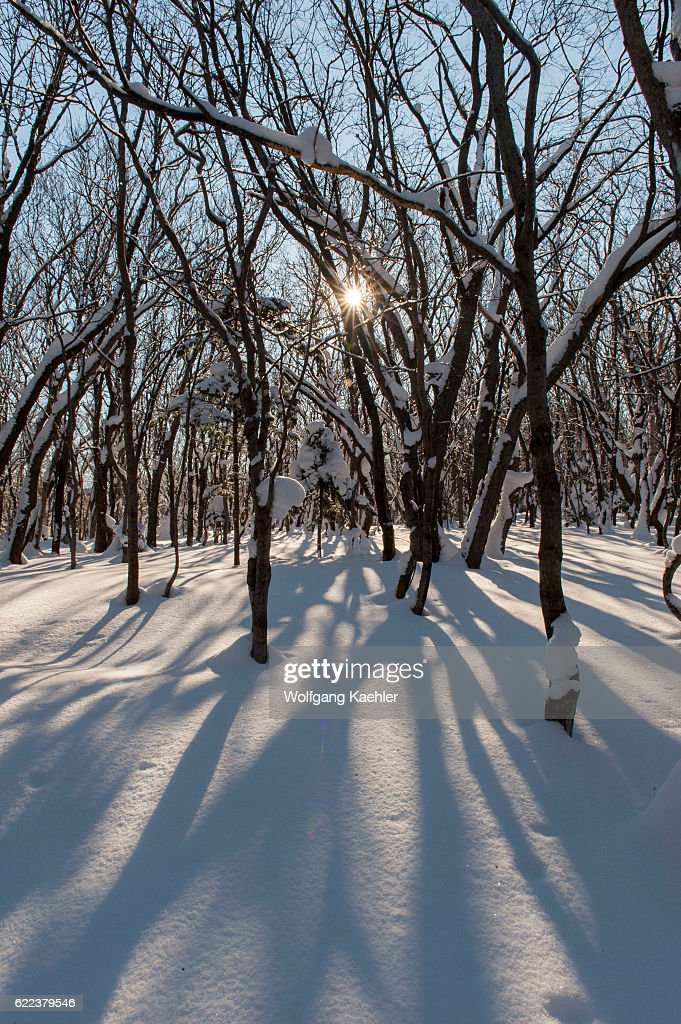 A forest scene in the winter with snow and a sunburst in... : News Photo