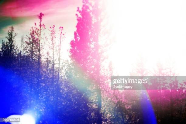 Forest scene, lens flare