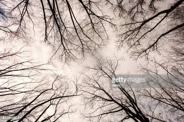 forest seen from below with rainy clouds - fading stock pictures, royalty-free photos & images