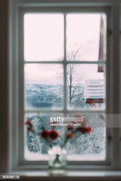 forest seen through window in winter - focus on background stock pictures, royalty-free photos & images