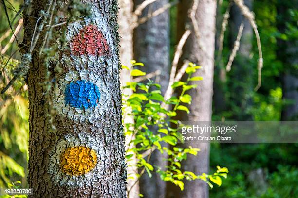 forest semaphore - semaphore stock pictures, royalty-free photos & images