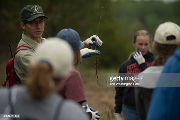 A US Forest Service ranger explains the planting of an American Chestnut seedling on the 6th consecutive year where volunteers planted trees in a...