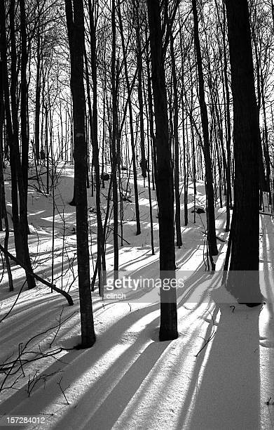 forest shadows on snow - bare tree stock pictures, royalty-free photos & images