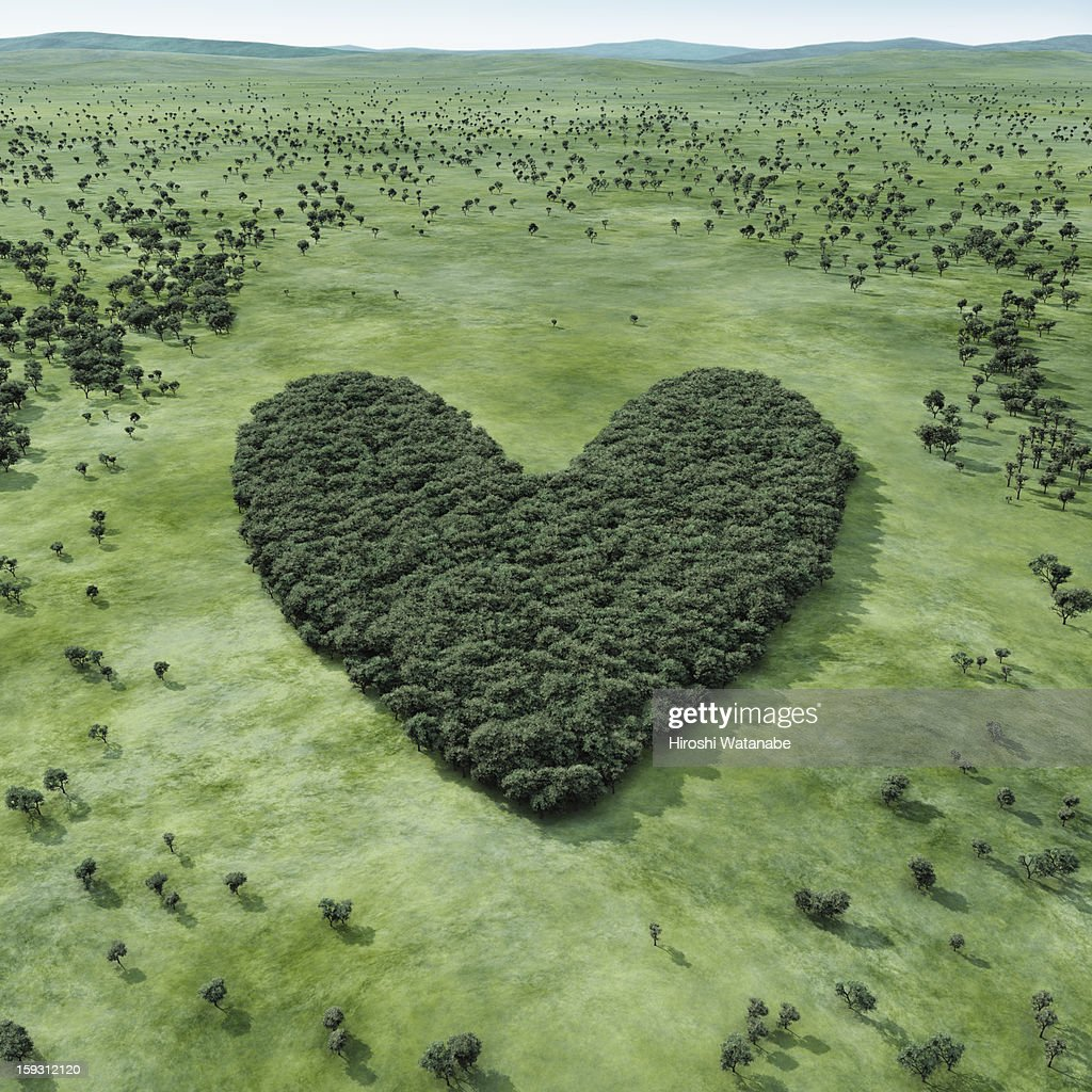 Forest shaped heart : Stock Photo