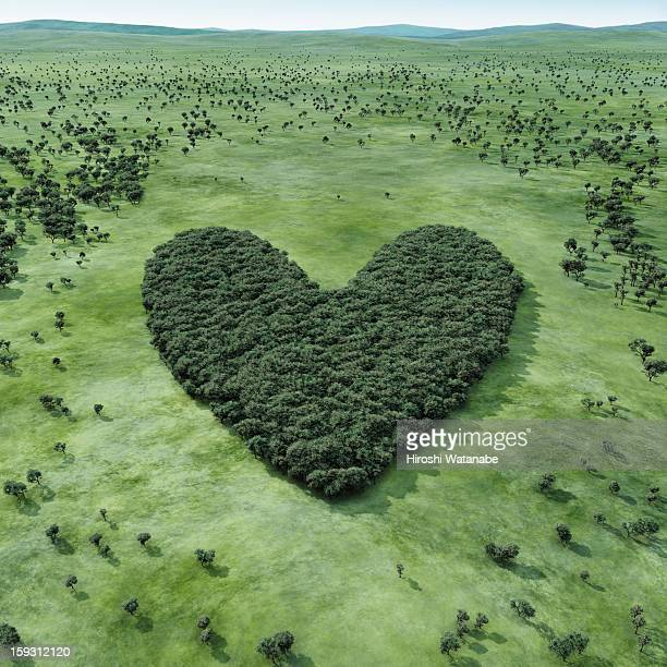 forest shaped heart - image foto e immagini stock