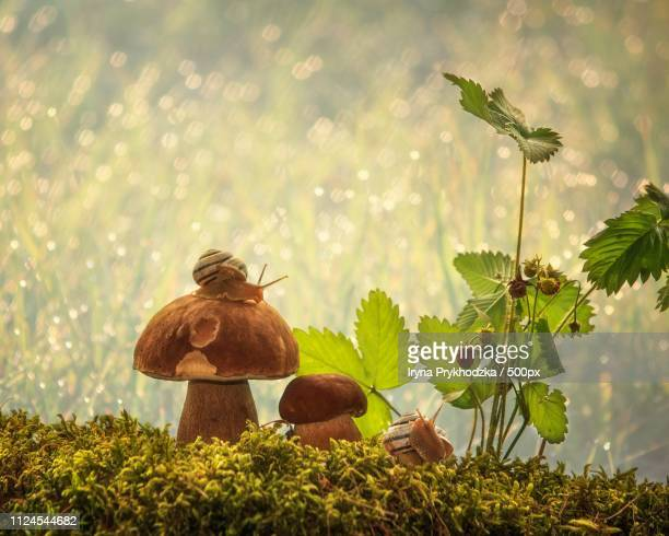 forest story - forens stock pictures, royalty-free photos & images