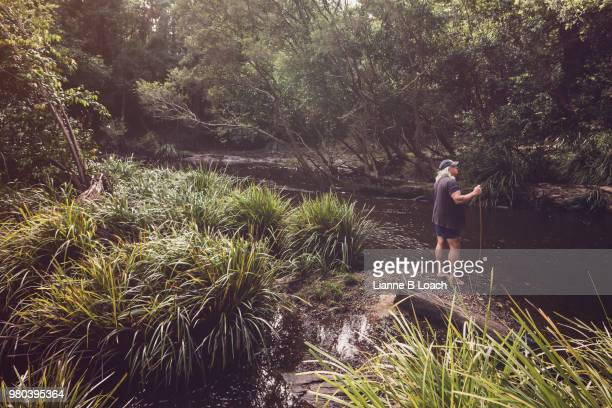 forest stream 1 - lianne loach stock pictures, royalty-free photos & images
