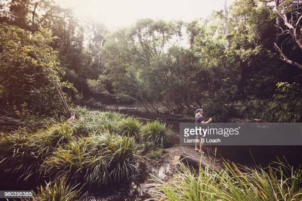 forest stream 3 - lianne loach stock pictures, royalty-free photos & images
