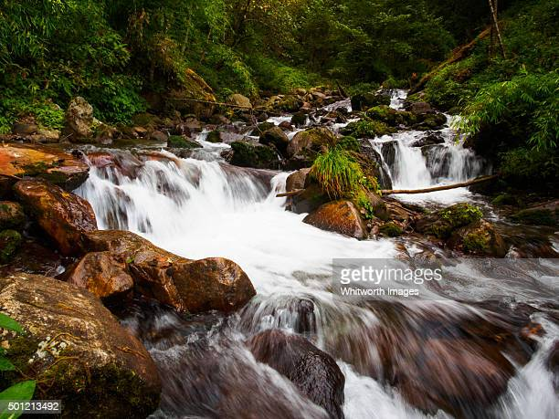 Forest stream, Annapurna Himalayan foothills, Nepal
