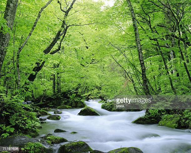 forest stream - aomori prefecture stock pictures, royalty-free photos & images