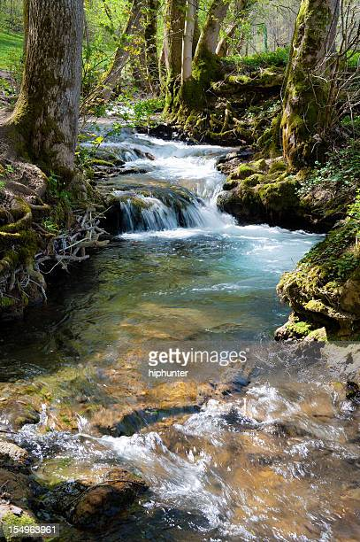 Forest stream with little cascade at spring