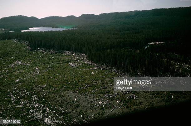 Forest Stripped by Tsunami