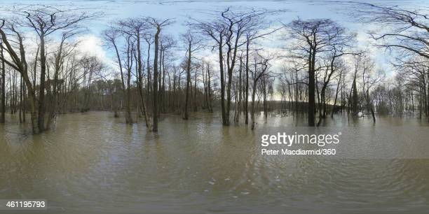 A forest suffers flooding after the river Arun burst its banks on January 7 2014 near Rackham England Parts of the United Kingdom are entering a...