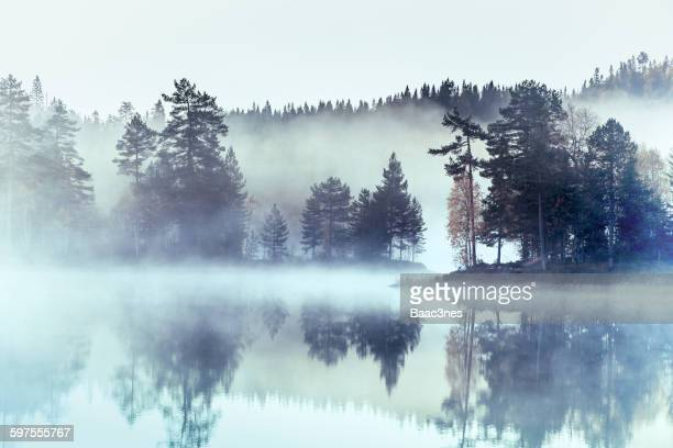 forest surrounded by fog and mist - fog stock pictures, royalty-free photos & images