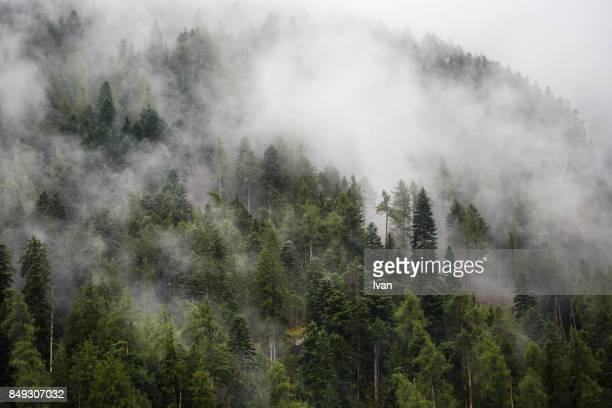 Forest surrounded by fog on hill