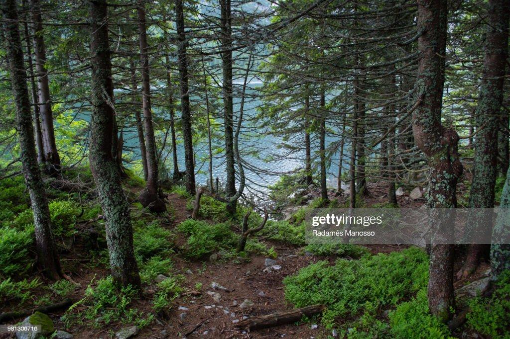 Forest surrounding Morskie Oko lake, Zakopane, Poland : Foto de stock