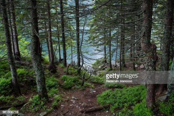 Forest surrounding Morskie Oko lake, Zakopane, Poland