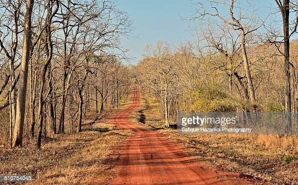 forest track - maharashtra stock pictures, royalty-free photos & images