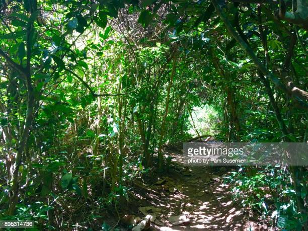 Forest Tunnel Through the Greenery