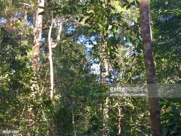 Forest View, Thailand