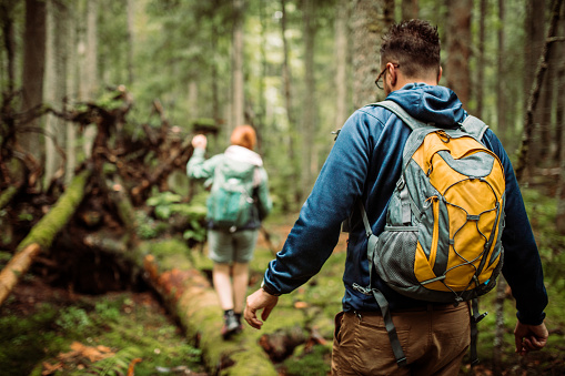 Forest walk and camping adventures 1167969374