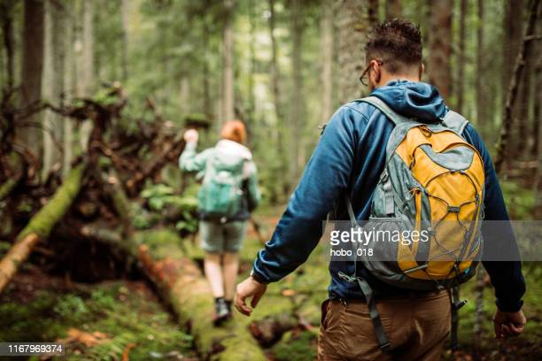 forest walk and camping adventures - backpacker stock pictures, royalty-free photos & images