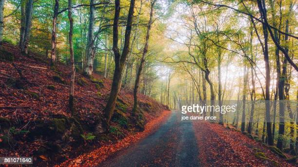 forest walk, llyn crafnant, llanberis, wales - snowdonia stock photos and pictures